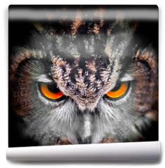 Fototapeta - Eagle Owl Staring - portrait