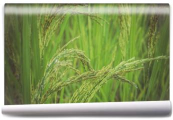 Fototapeta - ear of rice in green background.