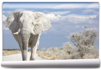 Fototapeta - elephant road