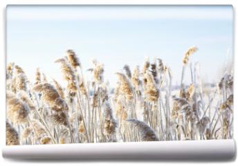 Fototapeta - Frozen dry grass.