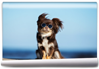 Fototapeta - funny chihuahua dog in sunglasses posing on a beach