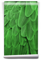 Fototapeta - Green Feathers