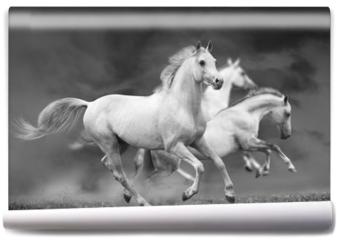 Fototapeta - horses run