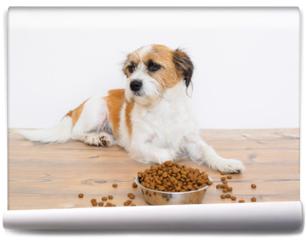 Fototapeta - Hund auf dem boden liegend vor einem Futternapf mit Trockenfutter