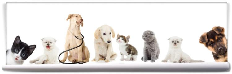 Fototapeta - kitten and puppy looking