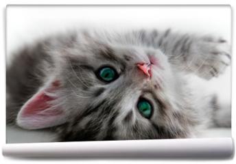 Fototapeta - Kitten rest - isolated