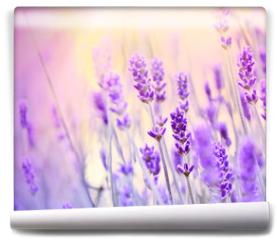 Fototapeta - Lavender lit by sun rays