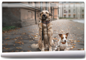 Fototapeta - Mixed breed dog  and Jack Russell Terrier walking in autumn park