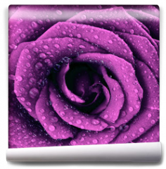Fototapeta - Purple dark rose background