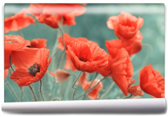 Fototapeta - red poppy flowers