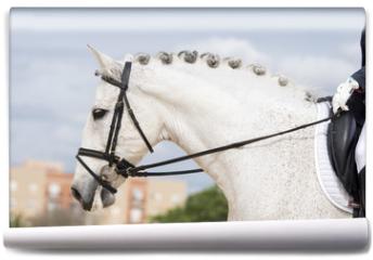 Fototapeta - Retrato de un caballo español durante una competicion de doma clasica