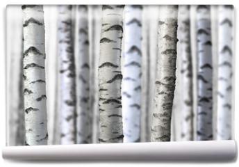 Fototapeta - seamless birch trees