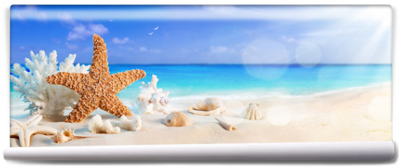 Fototapeta - seashells on seashore in tropical beach - summer holiday background