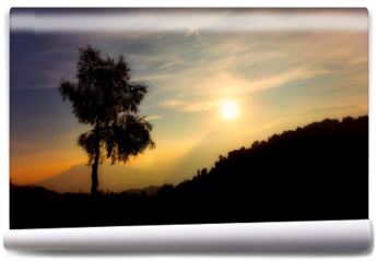 Fototapeta - Silhouette of birch plant on the alps at sunset