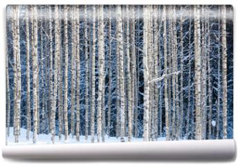 Fototapeta - Snowy birches
