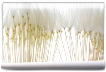 Fototapeta - soft white dandelion seeds