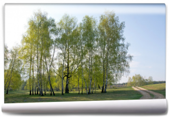 Fototapeta - Spring birch forest and road