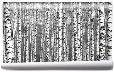 Fototapeta - Spring trunks of birch trees black and white