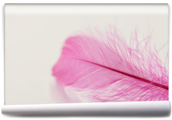 Fototapeta - Tender feather on light background for your design, pink color, copy space for text