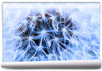 Fototapeta - The Dandelion background.