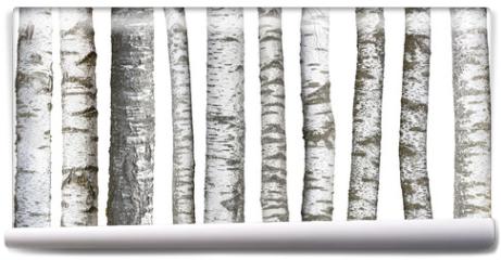 Fototapeta - Verschiedene Birkenstämme, isoliert auf weißem hintergrund
