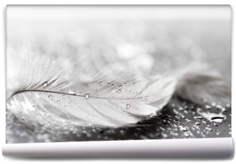 Fototapeta - White feather with water drops