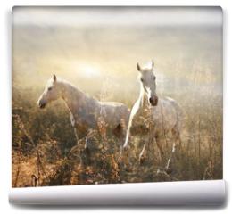 Fototapeta - white horse galloping on meadow