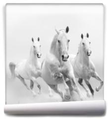 Fototapeta - white horses in dust