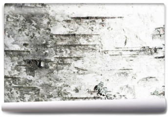 Fototapeta - White old birch tree bark. Closeup
