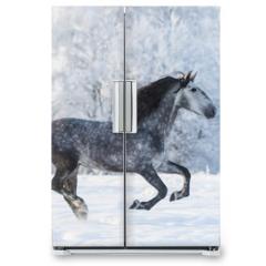 Naklejka na lodówkę - Purebred horse galloping across a winter snowy meadow