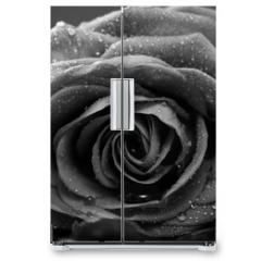 Naklejka na lodówkę - Rose, Nahaufnahme, schwarzweiss Umwandlung