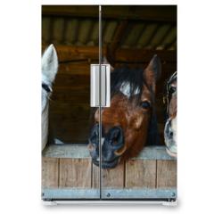 Naklejka na lodówkę - Funny horses in their stable