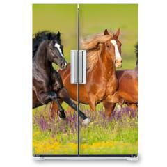 Naklejka na lodówkę - Horses run gallop in flower meadow