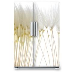 Naklejka na lodówkę - soft white dandelion seeds