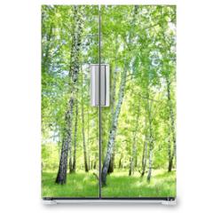 Naklejka na lodówkę - birch forest