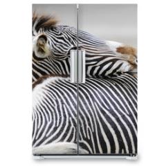 Naklejka na lodówkę - Zebra