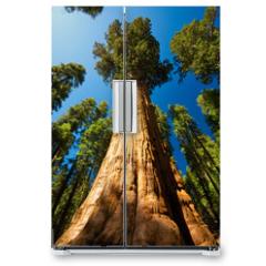 Naklejka na lodówkę - Giant Sequoia
