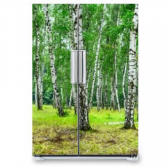 Naklejka na lodówkę - Birch grove on a sunny summer day, landscape banner, huge panorama