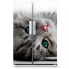 Naklejka na lodówkę - Kitten rest - isolated