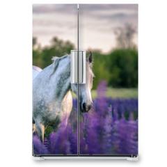 Naklejka na lodówkę - Portrait of a grey horse among lupine flowers.