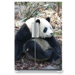 Naklejka na lodówkę - Panda is Posing Funny, Panda Valley, China