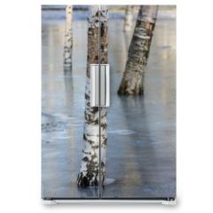 Naklejka na lodówkę - birch in the park