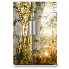 Naklejka na lodówkę - Birch Bark and Leaves in the Sunlight