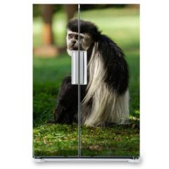 Naklejka na lodówkę - Black and white Colobus Monkey