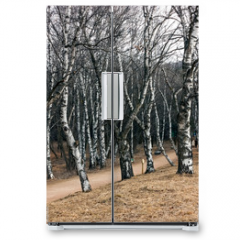 Naklejka na lodówkę - Trees birch forest.