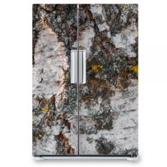 Naklejka na lodówkę - texture of the tree bark of a birch close up