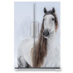 Naklejka na lodówkę - Grey Pure Spanish Horse with long mane.