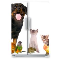 Naklejka na lodówkę - montage animaux