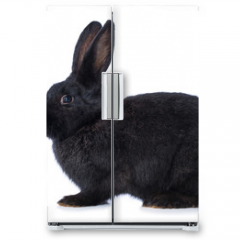 Naklejka na lodówkę - Black rabbit on white background