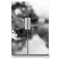 Naklejka na lodówkę - Flor preto e branco fundo desfocado